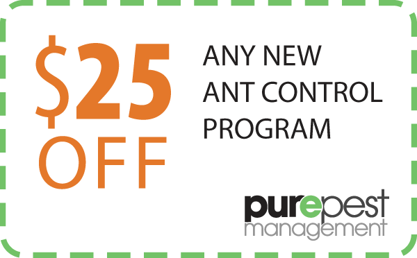 coupon - ants