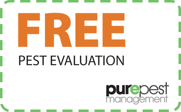 coupon - free evaluation