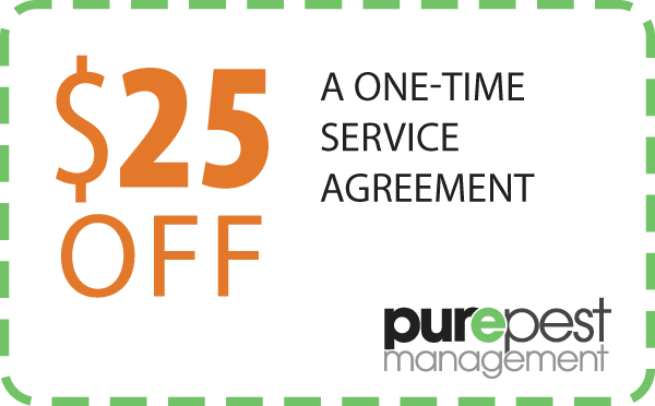 coupon - service agreement